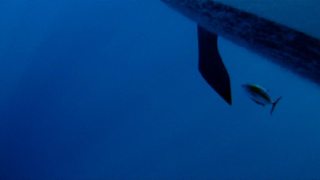 Tunfisch unter der Stark